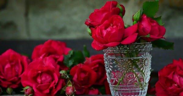 Ketahui! 7 Manfaat Air Mawar untuk Merawat Kecantikan Kulit